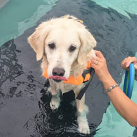 canine hydrotherapy client