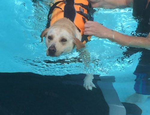 Arthritis and Hydrotherapy