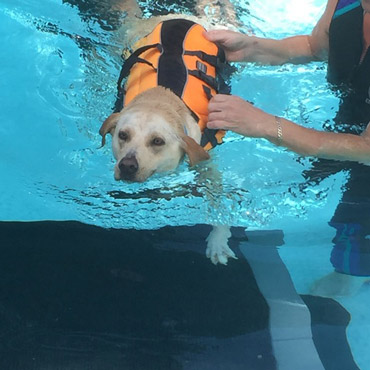 hydrotherapy helps Cali with her Arthritis