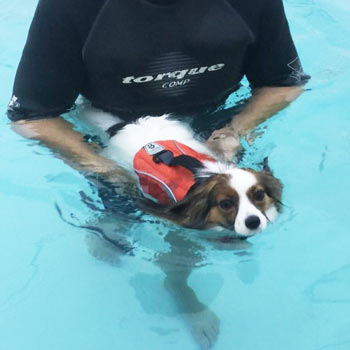 Hydrotherapy for Rayne